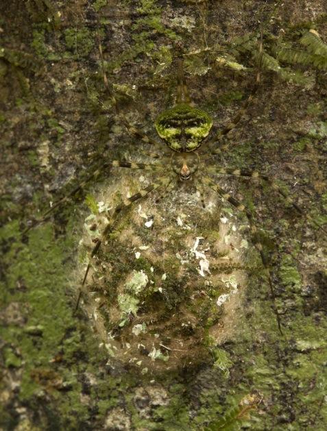 treetrunk_spider
