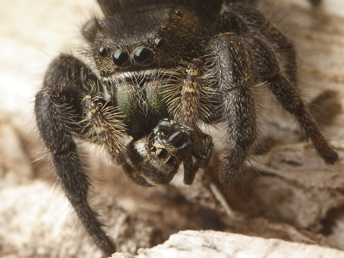 March   2014   spiderbytes