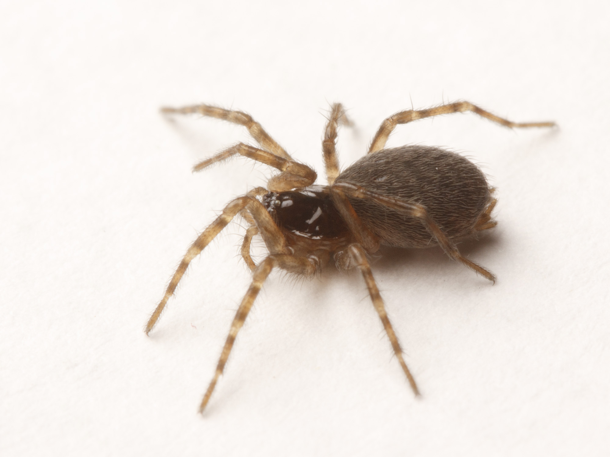 spiderbytes | This is a blog about spiders. | Page 3